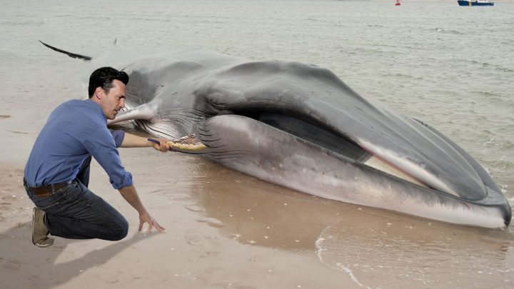 The Kindest Man Alive: Jon Hamm Made Crepes For A Beached Whale