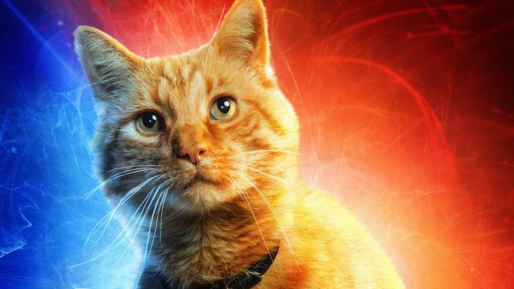 Everything you need to know about Goose, the feline scene-stealer of 'Captain Marvel'