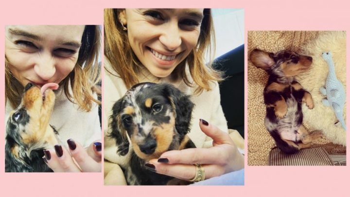 Emilia Clarke Just Got The Most ADORABLE Puppy Of All Time! – Perez Hilton